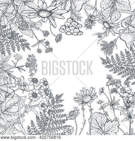 Floral Frame With Hand Drawn Wildflowers And Plants. Monochrome Vector Illustration