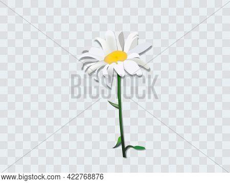 Bouquet Realistic Daisy, Camomile Flowers. Seasonal Sales.