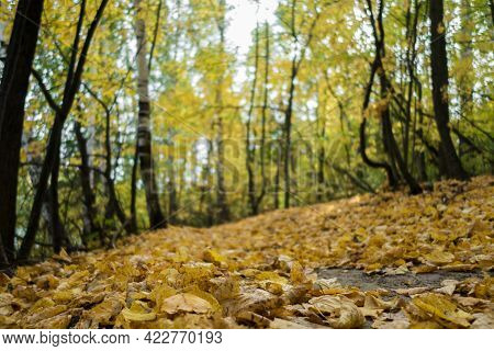 Close Up View On Yellow Fallen Leaves That Covered Forest Ground & Pathway. Blurred Background Conta