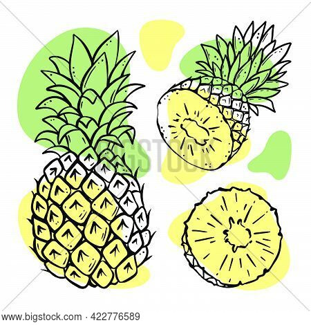 Pineapple Delicious Tropical Fruit Whole And Slices With Leaves For Design Of Organic Natural Produc