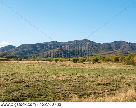 Panorama View Of Harvested Haystacks Against A Backdrop Of Blue Sky And Autumn Hills. Haystacks Lie
