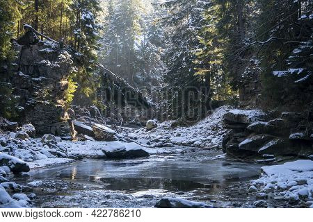 Winter Morning Coniferous Forest In Snow On A Sunny Day. Mountain Stream In Carpathians. Ukraine