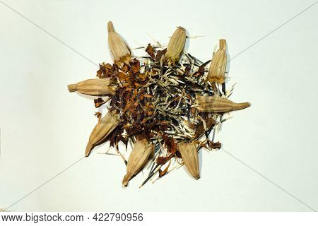 Marigold Seeds Are Long, Slender, And Pointed. They Are Dark On One End And Light On The Other And M
