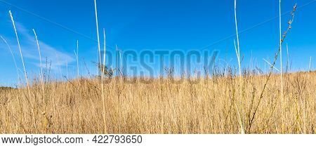 Dry Steppe Grass In The Foreground And Sky In The Background - Nature Panoramic Template With Copy S