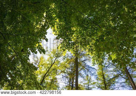 Footpath In Sunlight And Shadow In Green Woodland In Springtime, Voeren, Limburg, Belgium, June, 202