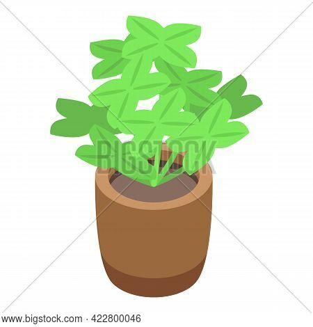 Luck Plant Pot Icon. Isometric Of Luck Plant Pot Vector Icon For Web Design Isolated On White Backgr