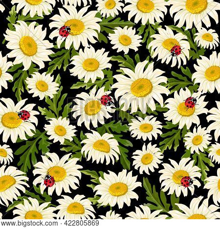 Pattern With Daisies And Ladybirds.chamomiles And Ladybugs On A Black Background In A Color Vector P