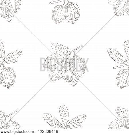 Vector Graphic Seamless Pattern With Terminalia Arjuna-01