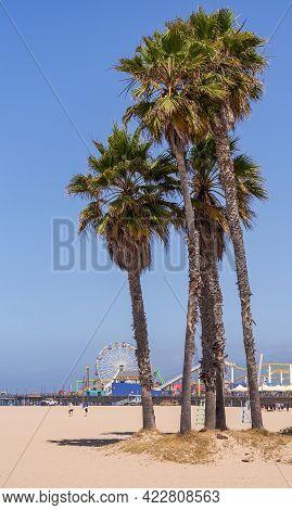 Santa Monica, Ca, Usa - June 20, 2013: Group Of Palm Trees On Sandy Beach With The Permanent Fair On