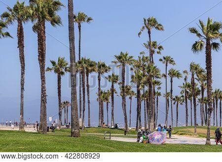 Santa Monica, Ca, Usa - June 20, 2013: Grass And Palm Tree Patch Along Boardwalk Of Beach Under Blue
