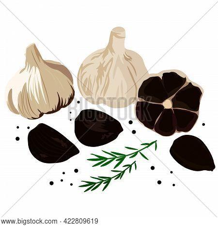 Black Garlic Vector Stock Illustration. Traditional Japanese Cuisine. Seasoning For Korean Dishes. D