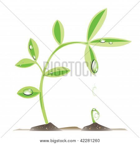 Plant giving water to a sprout