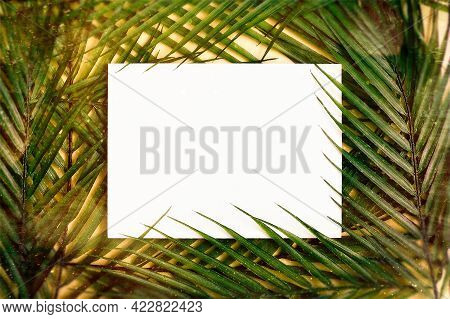 Flat Lay. Minimal Summer Concept With Palm Tree Leaf. Creative Copyspace With Paper Frame. Creative