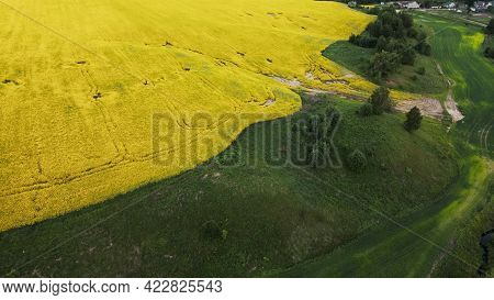 Blooming Rapeseed Field. Agricultural Fields. The Border With The Grain Field Is Visible. Aerial Pho