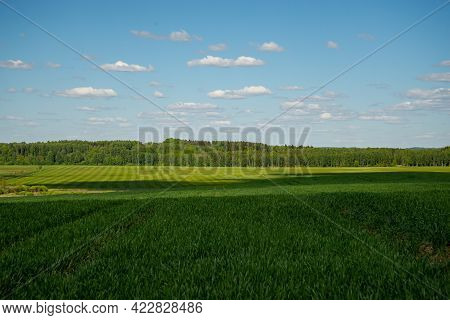 Idyllic Landscape, Tree Among Green Fields, Blue Sky And White Clouds In The Background