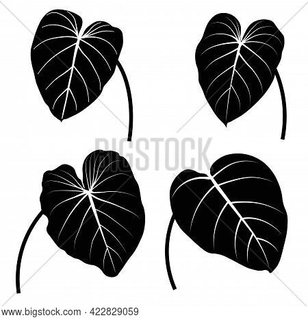 Tropical Monstera Leaves Vector Stock Illustration. Black And White Stencil Close-up. Template For S