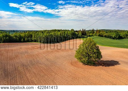 Aerial View On Tree In The Middle Of A Cultivated Agricultural Field On The Edge Of A Forest, Field