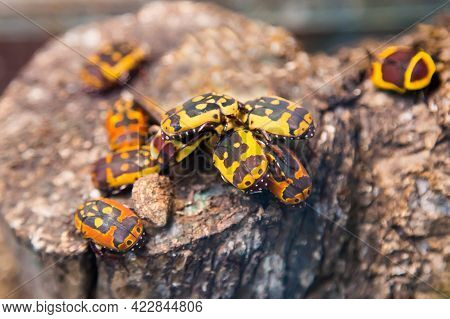 Bronze Three-spotted (lat. Flower Beetle) With A Beautiful Yellow Pattern On The Back, Sitting On A