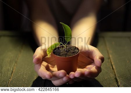 A Small Flowerpot With A Plant. Pot In Hands. Hold A Flowerpot With A Plant In Your Hands.