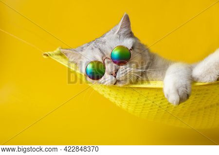 Portrait Of Adorable White Cat Wearing Sunglasses On Yellow Fabric Hammock, Isolated On Yellow Backg