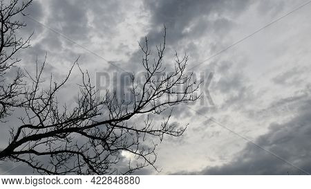 Winter Cloudscape With Bare Branches Of Dead Tree. Silhouettes Of Tree Branches Withot Leaves Agains