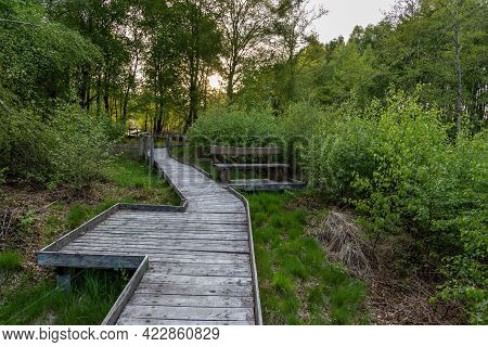 Hiking Trail On Wooden Boardwalks Through The Todtenbruch Moor In The Raffelsbrand Region In The Eif