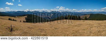 Carpathian Mountain Plateau Spring Panorama With Blooming Purple Violet Crocus Heuffelianus (crocus