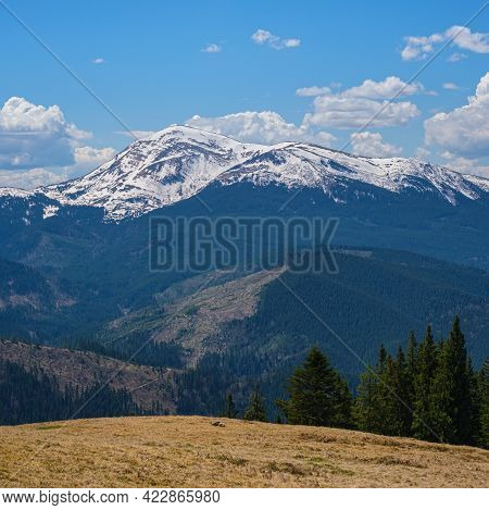 Carpathian Mountain Plateau Spring View With Blooming Alpine Flowers, Ukraine.