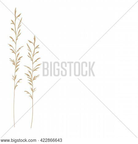 Pampas Grass Vector Stock Illustration . Cream Branch Of Dry Grass. Panicle Cortaderia Selloana Sout