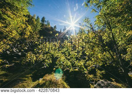 Scenic Sunny Mountain Autumn Landscape Against Sun With Yellow Leaves On Trees In Sunbeams. Colorful