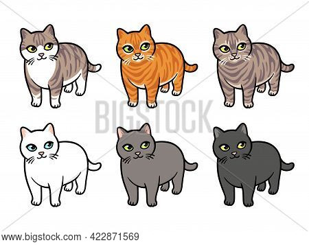 Cartoon Cat Drawing Set, Different Colors And Breeds. Isolated Vector Illustration, Funny Chubby Cat