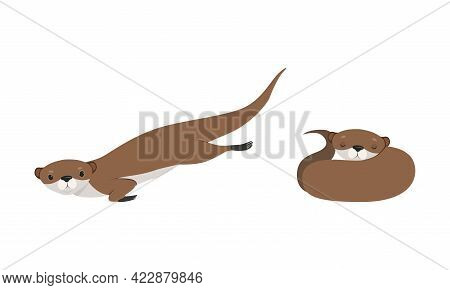 Set Of Cute Weasel In Various Poses, Adorable Funny Wild Animal In Action Cartoon Vector Illustratio