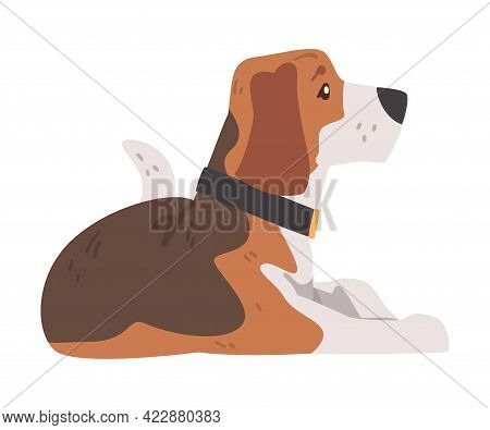 Beagle Dog Pet Animal Lying On Floor, Small Dog With Brown White Coat And Long Ears Beagle Cartoon V