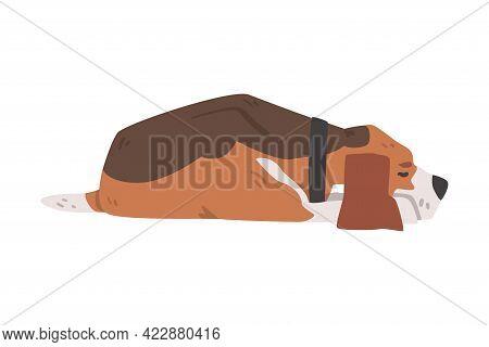 Cute Sleeping Beagle Dog Pet Animal, Hunting Dog With Brown White Coat And Long Ears Beagle Cartoon