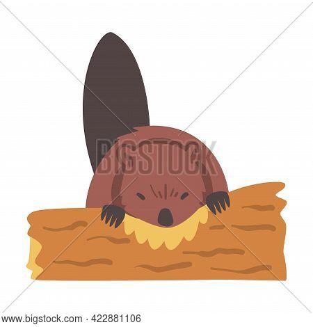 Cute Beaver Gnawing Log, Brown Rodent Wild Mammal Animal Cartoon Vector Illustration