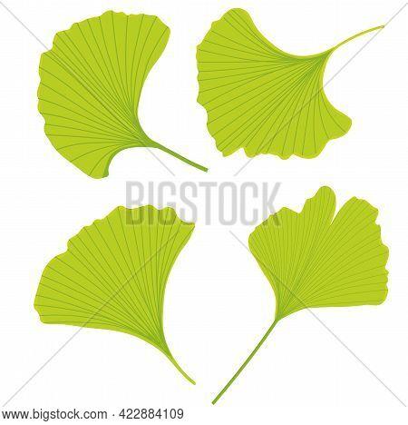 Vector Stock Illustration Of Gingko Leaf. Pastel Poster For A Wedding Invitation. Gentle Botany. Gin