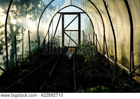 Polycarbonate Greenhouse In The Evening Sunlight, You Feel Calm And Comfort. In Summer. Selective Fo