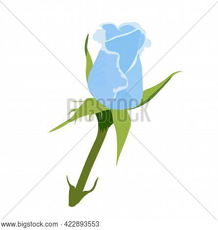 Vector Stock Illustration Of A Blue Rose. A Bud Rose On Navy. Spring Delicate Flower Close-up. Isola