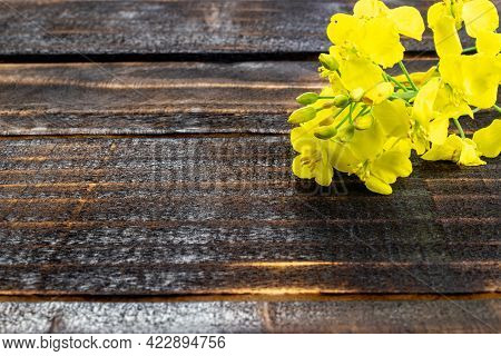 Rapes Flower. Yellow Rape Flowers For Healthy Food Oil On Wooden Background. Rapeseed Plant, Colza R