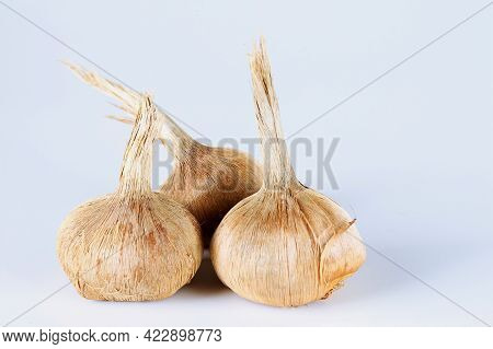 Crocus Bulbs Sativus On A White Background. Bulbs For Planting Saffron, For Getting The Most Expensi