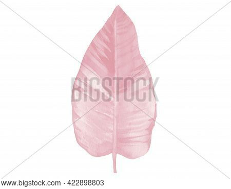 Light Pink Watercolor Leaf. Pink Watercolour Illustration Isolated On White Background. Botanical Ar
