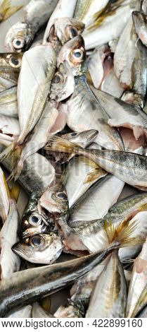 Clean Fish Are Sold Fresh At The Fish Market, Fresh Horse Mackerel Fish, Horse Istavrit, Sold