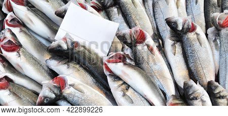 Clean Fish Are Sold Fresh At The Fish Market, Fresh Perch Fish, Levrek, Sold