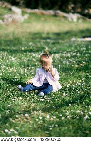 Cute Little Girl With A Ponytail On Her Head Sits On A Green Lawn Among White Daisies And Gnaws A Fr