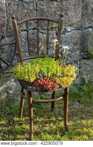 Old Wooden Chair Planter. Outdoor Vintage Chair Recycled Used As A Planter. Chair Flowerpot In The G