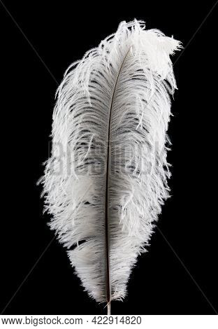 Beautiful White Feather On A Black Background.