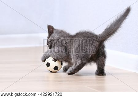 A Small Gray Kitten Plays With A Toy A Soccer Ball. Cat Toys.