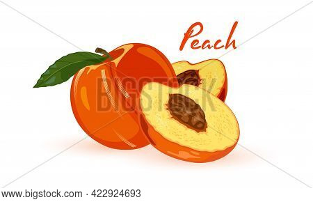 Juicy Mellow Summer Fruit From Grandma Garden, Vitaminized Product. Vector Whole And Half Fruit, Exo