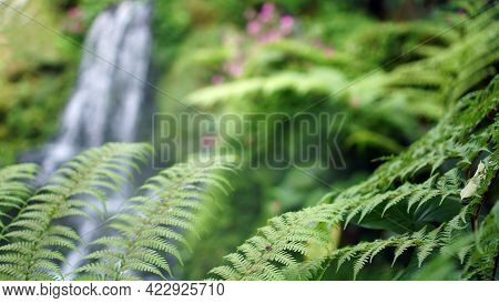 Close Up Fern Forest With Beautiful Waterfall And Mossy Forest Background Tropical Lush Nature