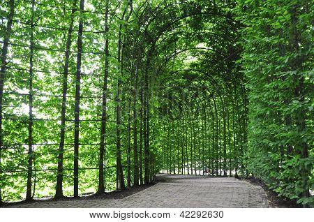 plants dome